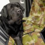 Создание и продажа автогамаков для перевозки собак в машине https://animalcommunity.ru/shop-animal-community/